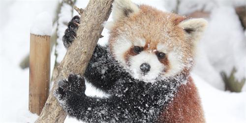 雪豹等哺乳动物以及鸟虫类等约170多种可爱的动物.