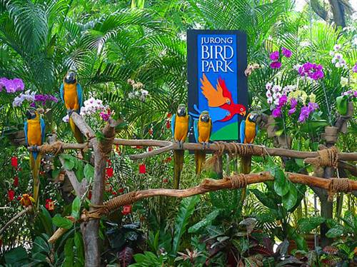 裕廊飞禽公园是全球最大的鸟类动物园之一,.