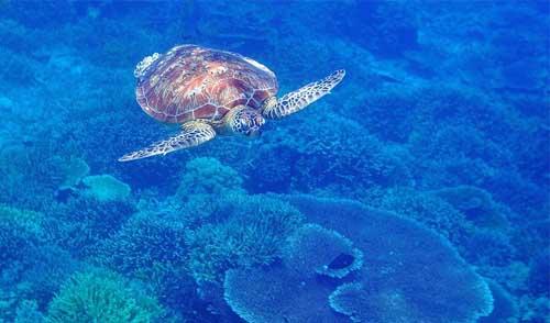 海龟岛海洋公园