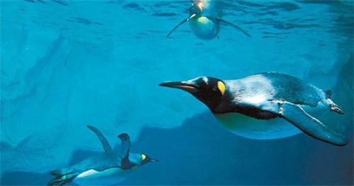 壁纸 动物 海底 海底世界 海洋馆 水族馆 鱼 鱼类 500_263