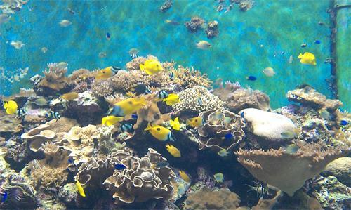 壁纸 海底 海底世界 海洋馆 水族馆 桌面 500_299