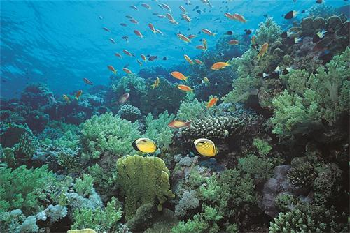 穆鲁拉巴海底世界水族馆
