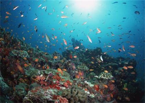 厦门海底世界原为鼓浪屿公园,坐落在鼓浪屿.