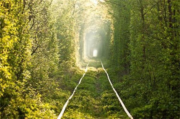 童话树林风景动态